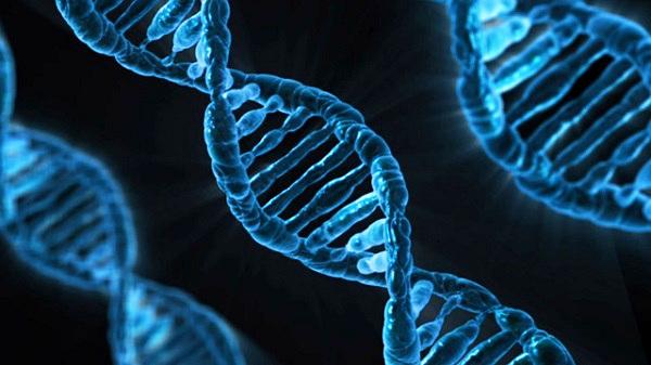 命の神秘 - 遺伝子