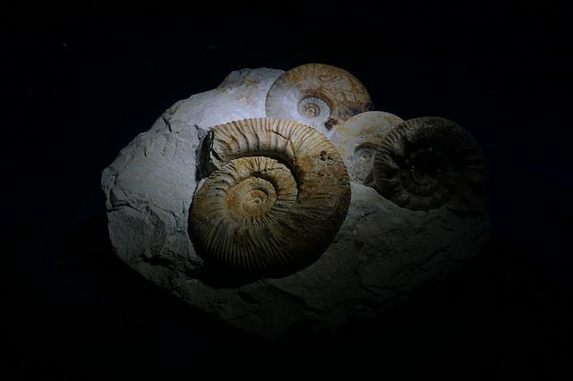 進化論が怪しい理由5
